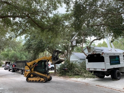 southern environmental tree removal with truck n trailer, box truck, and cat equipment