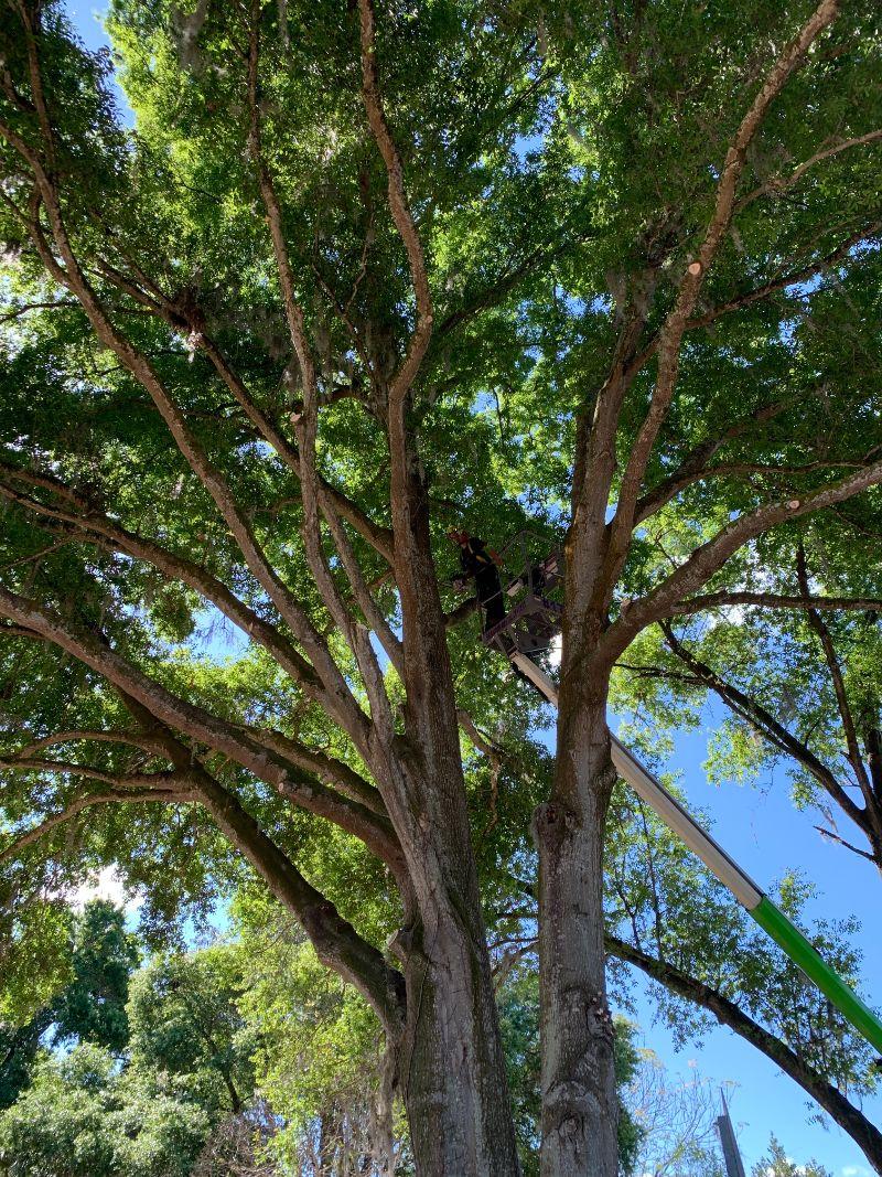 bucket-in-tree