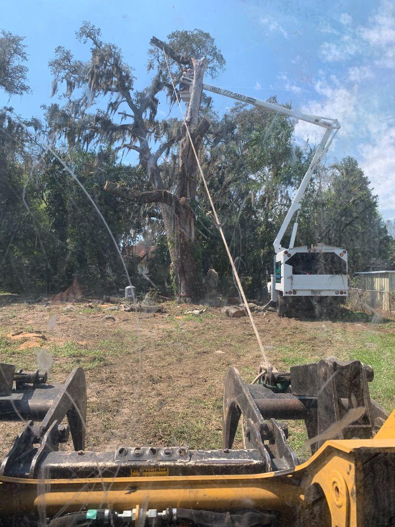 bucket-truck-trimming-tree