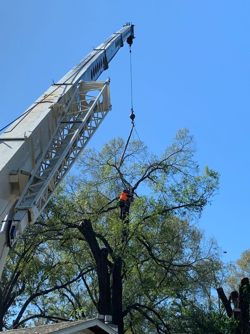 large-crane-2