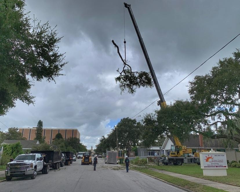 large-crane-lifting-tree-branch