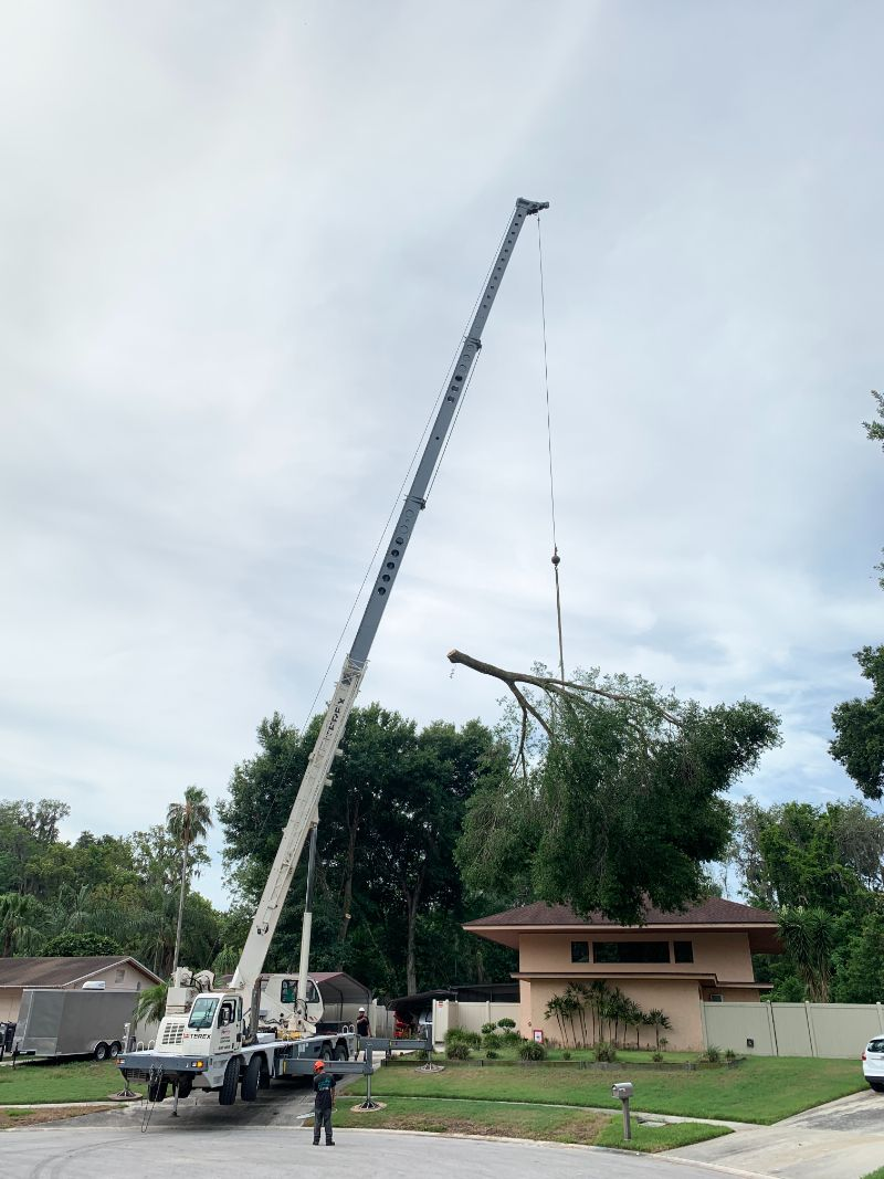 large-crane-moving-branch