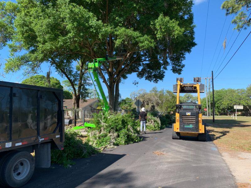 tree-trimming-dump-truck-bobcat